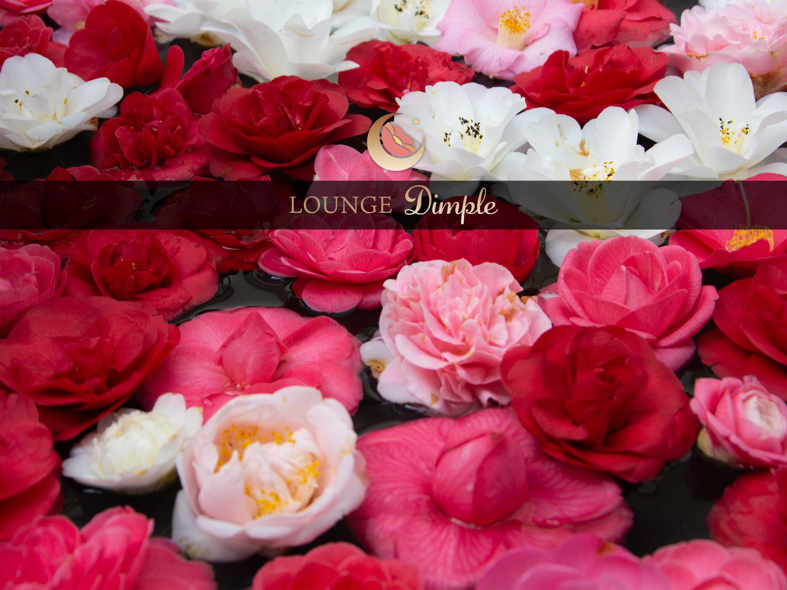 Lounge Dimpleの画像